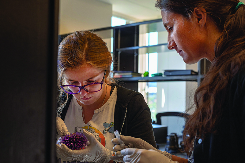 Melissa Pespeni in her lab watching a student handle a purple sea urchin.