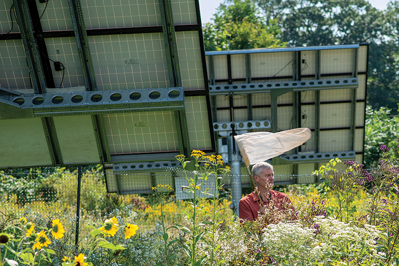 Taylor Ricketts standing near wildflowers planted below solar panels.