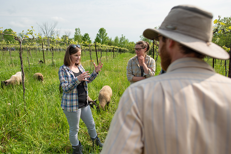 Researchers and winemarkers in discussion at Shelburne Vineyard