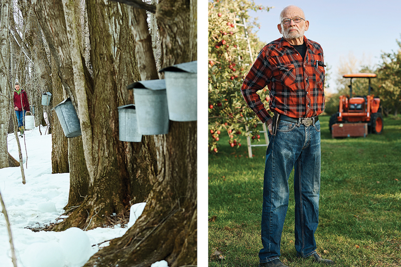 Row of maple trees with sugaring buckets attached. And portrait of alumni Ray Allen in his apple orchard.