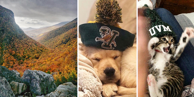Foliage in Vermont mountains; a dog and cat in UVM hats